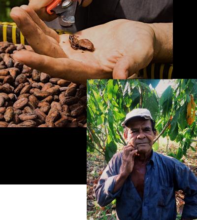 04 Passion of the farmer 農家のカカオ作りに対する情熱